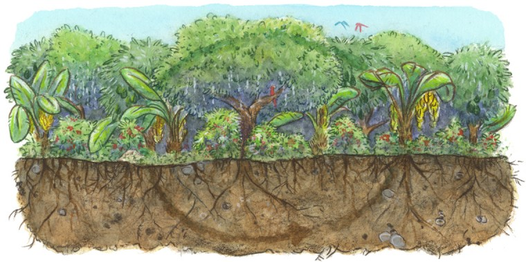 Building On Success: Telling the Regenerative Future of Agriculture